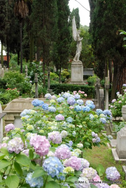 Beauty at the Grave