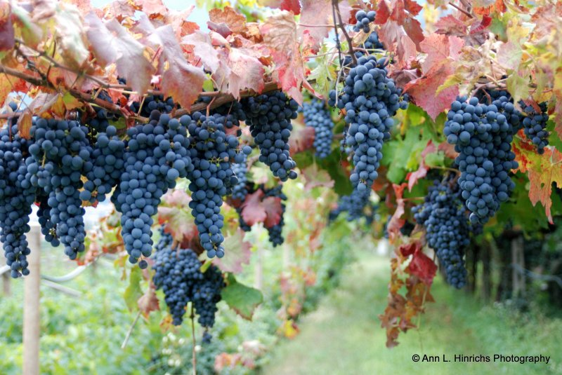Trentino Harvest Time