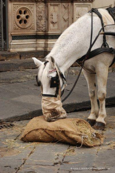 Florentine Horse