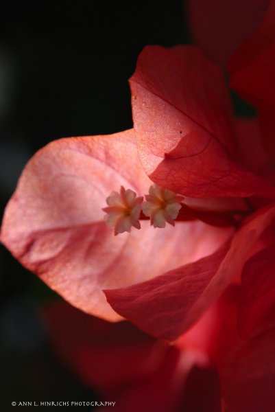 Belize Flower Duet