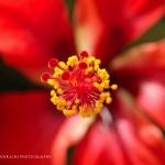 Centered beauty-Belize