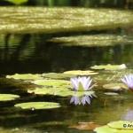Greenbrook Gardens, SC Nature 4