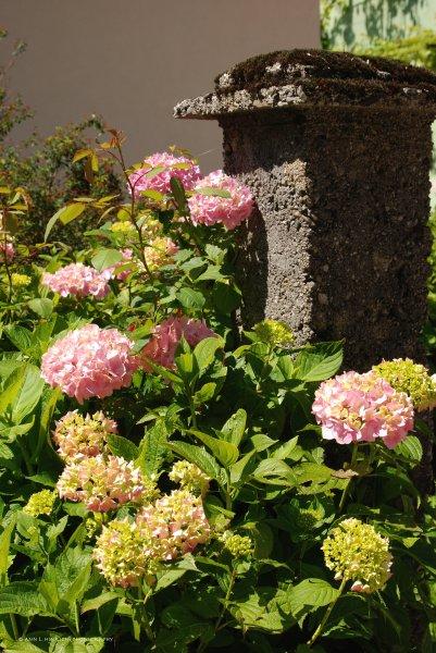 Slovenian village flowers