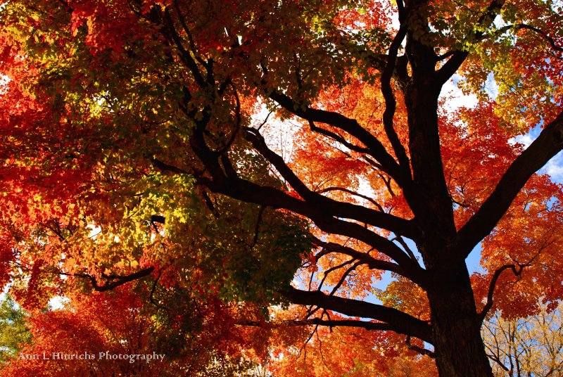 Fall in Wayzata Minnesota