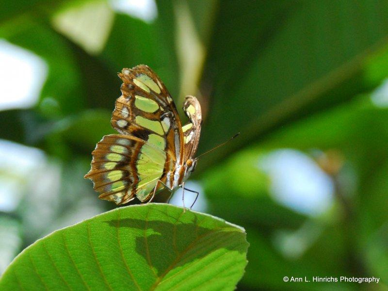 Greenbrooke Gardens, South Carolina-1