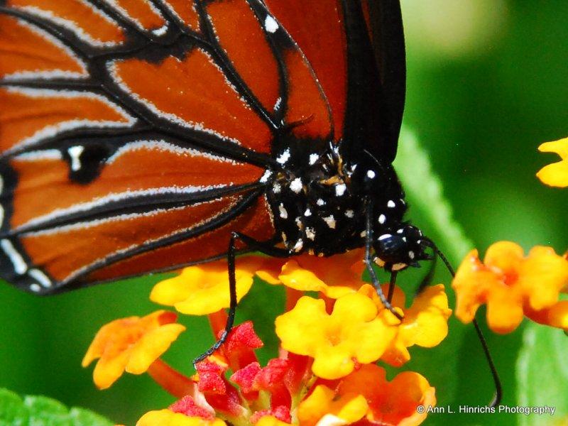 Greenbrooke Gardens, South Carolina-2