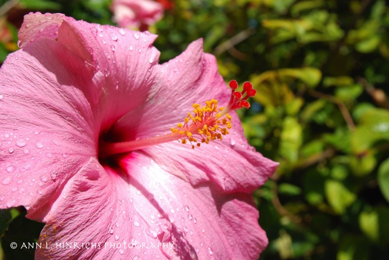 Beauty of Belize 8