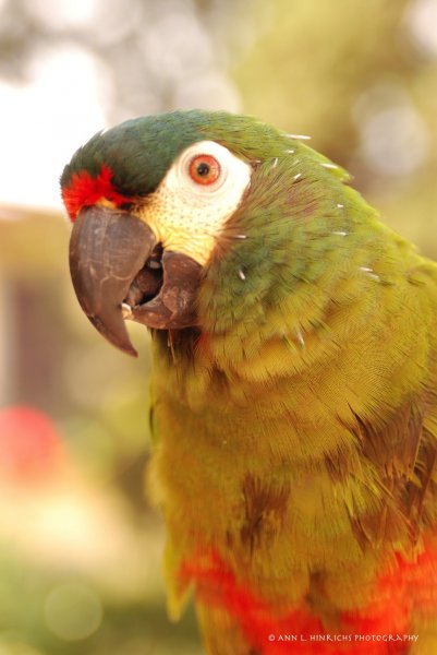 Florence Parrot