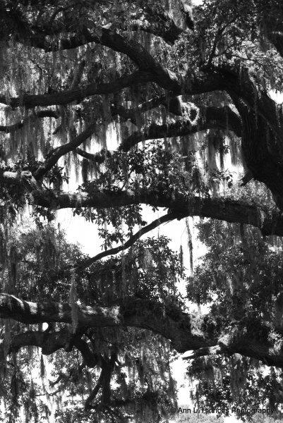 Greenbrooke Gardens, South Carolina-3