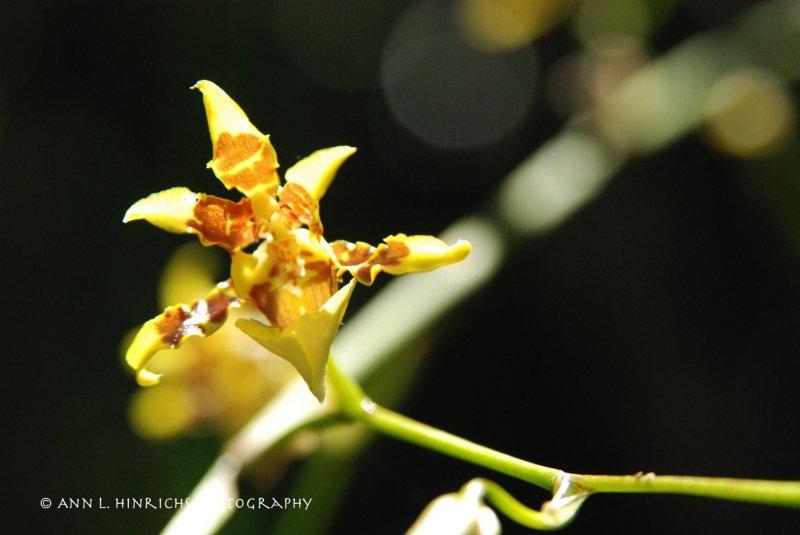 Mini Orchids at the Blue Hole, Belize