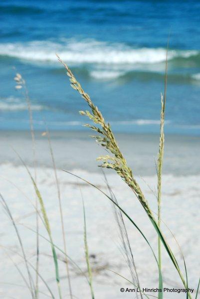 Pawley's Island, South Carolina-1