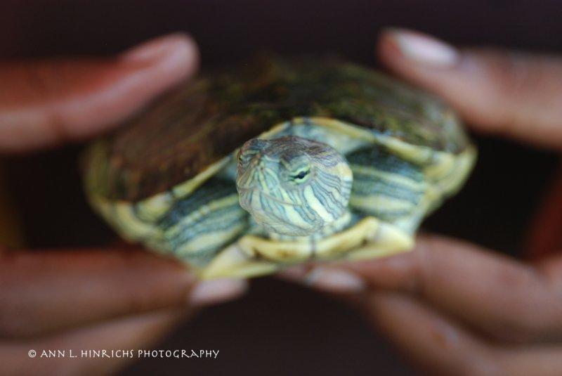 Belizean Turtle