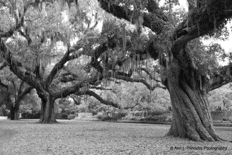 Greenbrooke Gardens, South Carolina-4