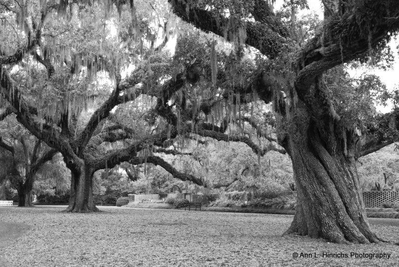 Greenbrooke Gardens, South Carolina-4