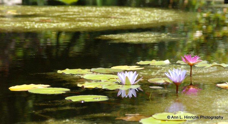 Greenbrooke Gardens, South Carolina-9