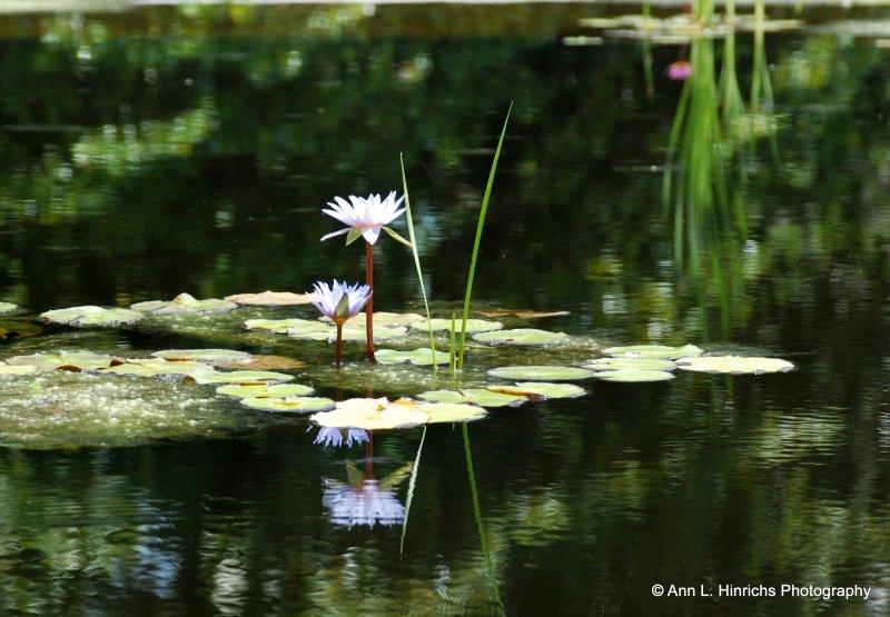 Greenbrooke Gardens, South Carolina-11