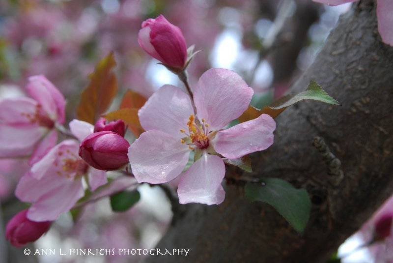 Spring Beauty 3-2013