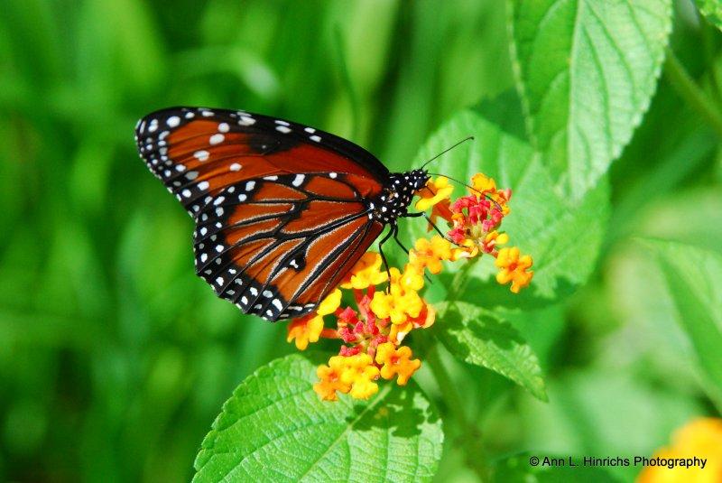 Greenbrooke Gardens, South Carolina-13