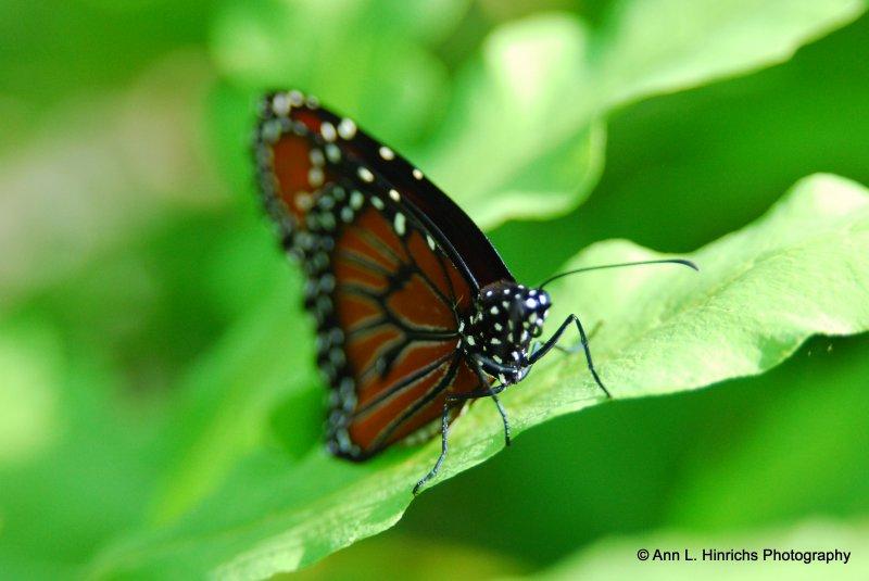 Greenbrooke Gardens, South Carolina-14