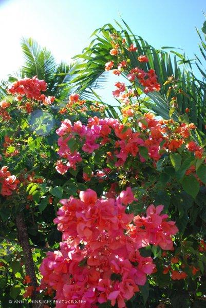 Beauty of Belize 1