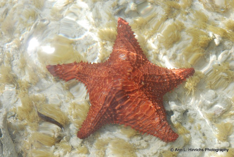 Star Fish in Sea