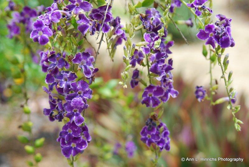 Flowing Purple Flowers
