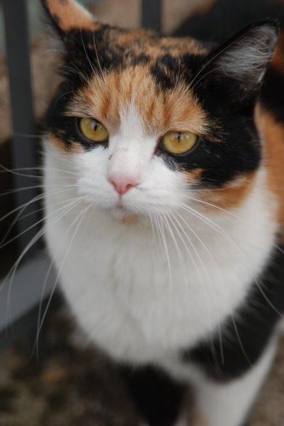 Il gatto in Italia.