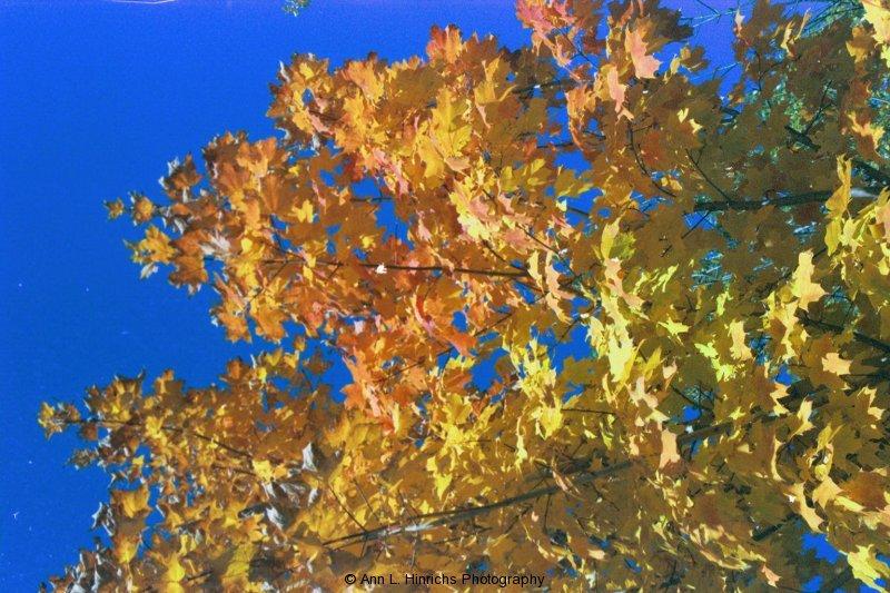 Fall Trees Blue Sky