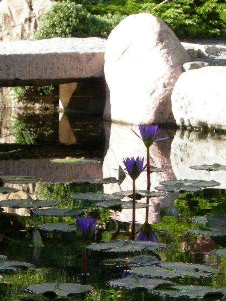 Japanese Gardens Como Park, Minnesota
