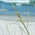 Pawley's Island, South Carolina-1
