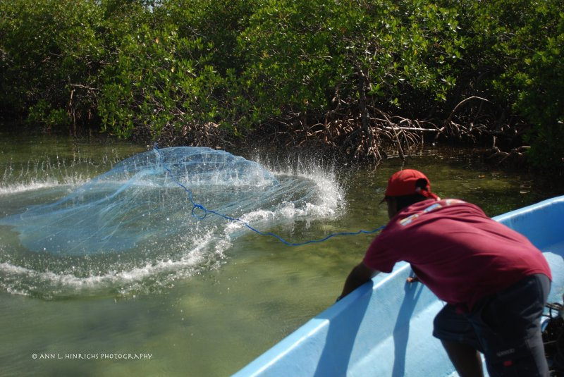 Catching Bait, Belize