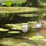 206-Brookgreen Gardens - South Carolina