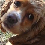806-FREE CARD - Barton Family Dog-Lucy Lu