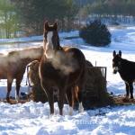 801-The Pierson Farm-Alma Center, Wisconsin