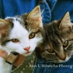 805-Kitties on the Pierson Farm-Alma Center, Wisconsin