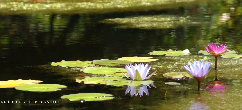 Monet-Like Pond